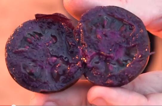 pomodoro-viola-1