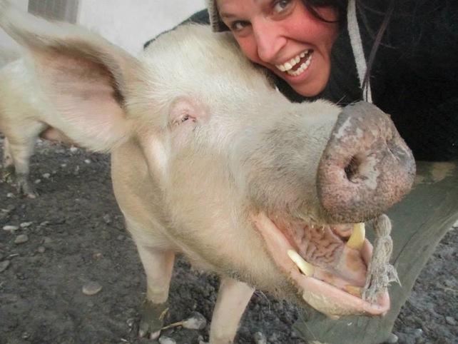 maiale-piccola-fattoria-animali-fb