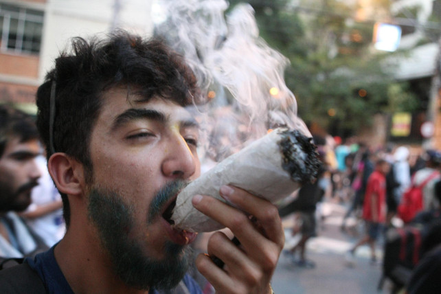 cannabis-ansa