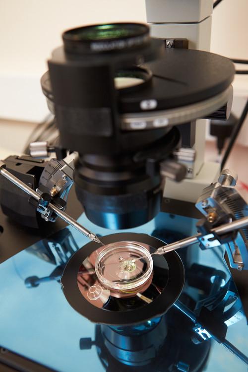 fecondazione-eterologa-in-vitro-shutterstock_155809460