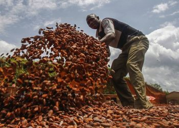 epa04795498 Farmers from Ivory Coast work with cacao beans at a farm in South West Ivory Coast, 12 June 2015. Cocao the main ingredient of chocolate is a highly profitable crop in West Africa. Ivory Coast leads the world in production and export of the cocoa beans supplying 33 percent of cocoa produced in the world. Recent allegations of child labour on Cocao planations in West Africa has tainted the industry posing questions over the ethics of West African farmers.  EPA/LEGNAN KOULA