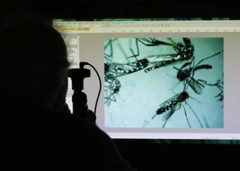 Evaristo Miqueli, a natural resources officer with Broward County Mosquito Control, looks through a microscope at Aedes aegypti mosquitoes, Tuesday, June 28, 2016, in Pembroke Pines, Fla. The mosquitoes were collected from a residential home during a routine inspection, as part of the county's mosquito control procedure. Health officials are concerned about the spread of the Zika virus in the U.S., which is spread by the Aedes aegypti mosquito. (ANSA/AP Photo/Lynne Sladky) [CopyrightNotice: Copyright 2016 The Associated Press. All rights reserved. This material may not be published, broadcast, rewritten or redistribu]