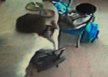 In un frame da un video della Polizia Municipale di Portici, le telecamere 'incastrano' le due maestre di Portici (Napoli), filmate dalle microcamere della Municipale e consegnate alla Procura, che ne ha chiesto il rinvio a giudizio per maltrattamenti nei confronti dei bimbi, 20 dicembre 2014. ANSA / US POLIZIA - FERMO IMMAGINE DA VIDEO +++ANSA PROVIDES ACCESS TO THIS HANDOUT PHOTO TO BE USED SOLELY TO ILLUSTRATE NEWS REPORTING OR COMMENTARY ON THE FACTS OR EVENTS DEPICTED IN THIS IMAGE; NO ARCHIVING; NO LICENSING+++