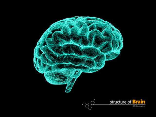 cervello-shutterstock_597482291