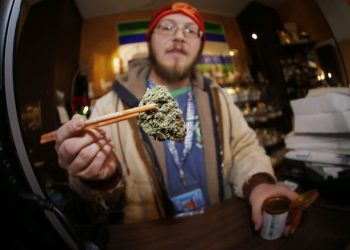 FILE--In this Friday, Dec. 9, 2014, file photograph, Matt Hart holds up a bud of Lemon Skunk, the most potent strain of marijuana available at the 3D Dispensary in Denver. A bill making its way through the Colorado legislature may allow recreational pot growers to instantly re-classify their product as medicinal grow if there is a change in federal law or enforcement. (AP Photo/David Zalubowski, file)