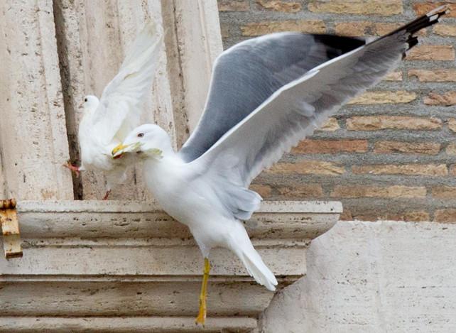 vaticano-colomba-gabbiano-ansa