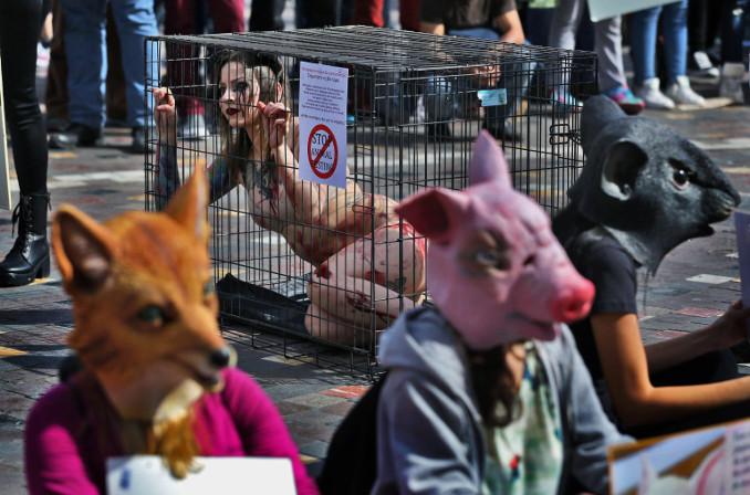 Protesta degli animalisti contro la sperimentazione animale