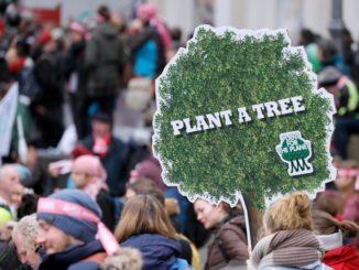 alberi cambiamento climatico