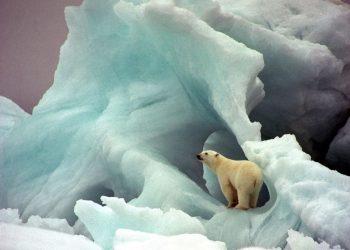 orso bianco, simbolo ecologia
