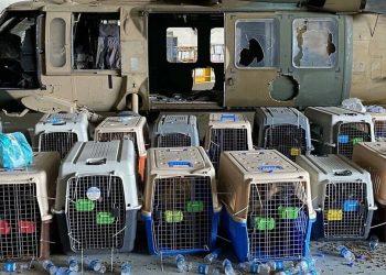 Cani abbandonati dagli Usa in Afghanistan